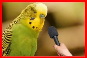 aves y pajaros que hablan