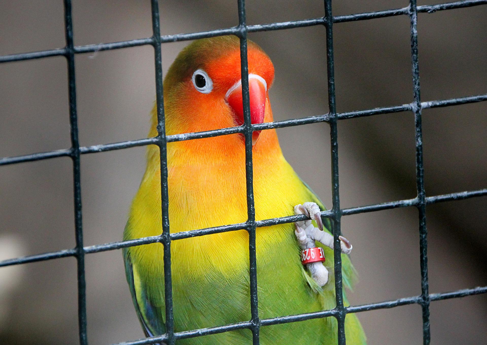 Jaulas para aves aviariojp