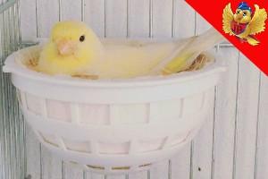 nidos para canarios aviariojp