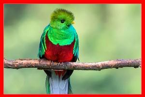 Quetzal aviariojp