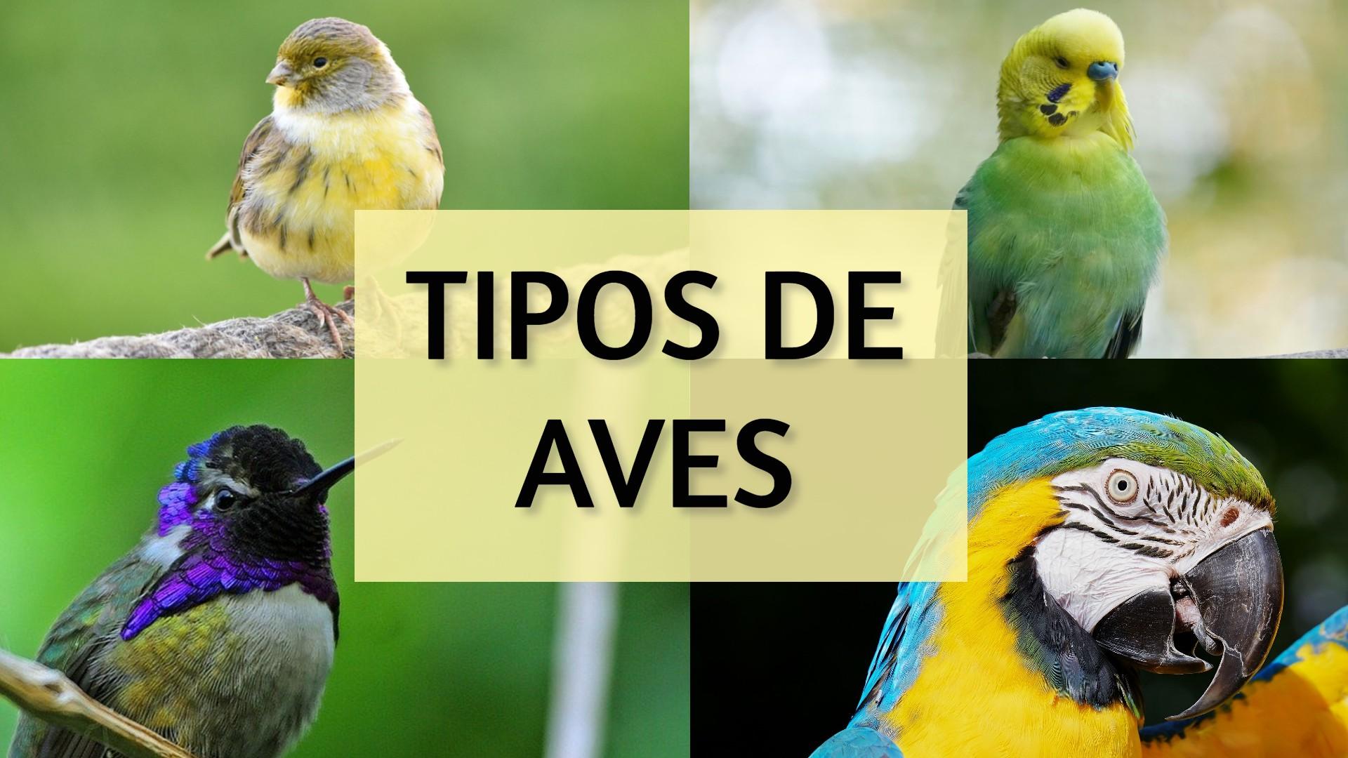 Tipos de aves y clasificacion de las aves