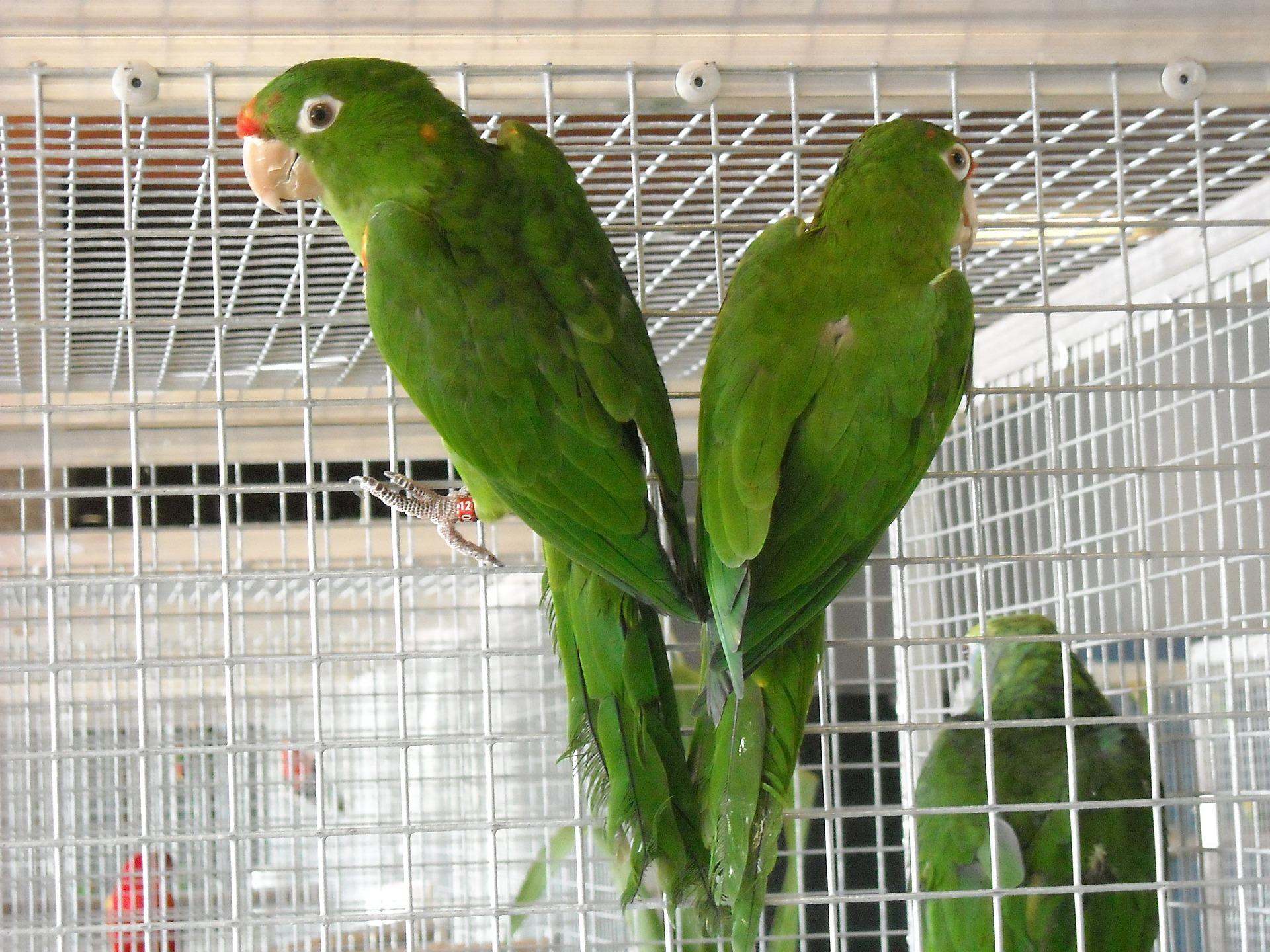 Jaulas para loros y guacamayos aviariojp