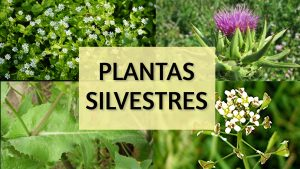 plantas silvestres para pajaros