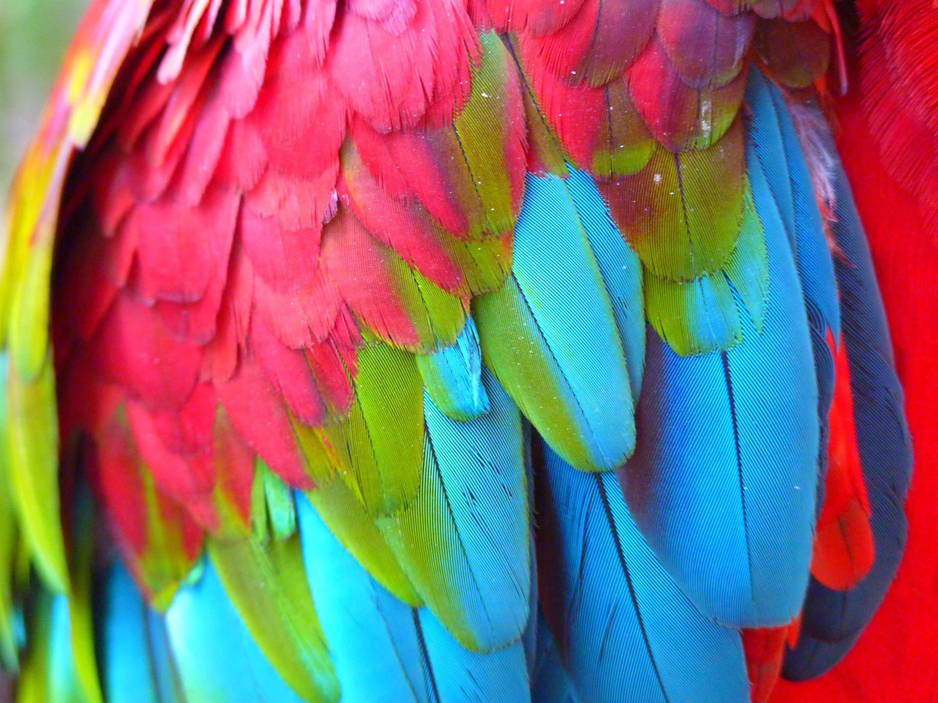 Loros guacamayos aviariojp