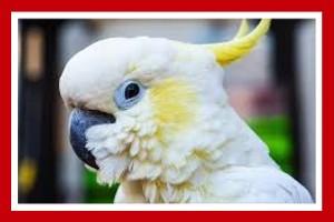 cacatua aves exoticas