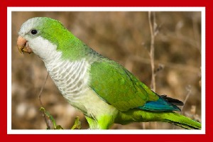 cotorra aves exóticas