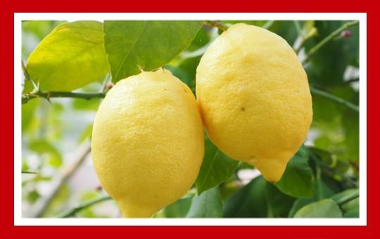 frutas para pajaros limon