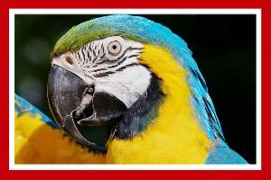 loro guacamayo aves exoticas