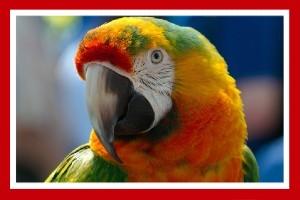 loros guacamayos aves de colores