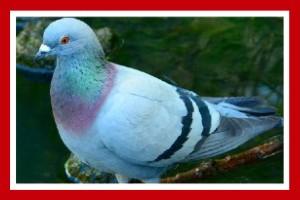 paloma bravia ave